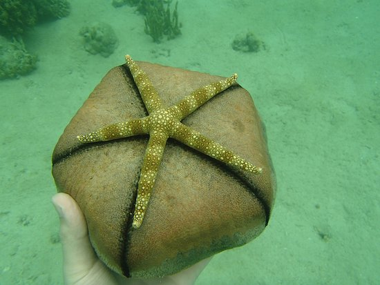 Banana Island: Звезда мячик