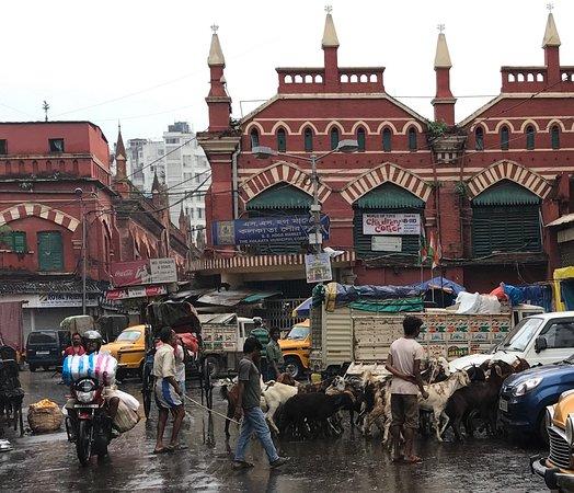 Kolkata Story Tours