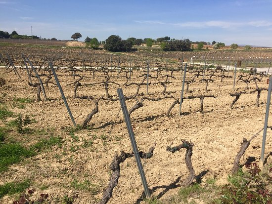 Province of Tarragona, Spain: The tour is now redesigened and provides a lot mot more information of wine making as before (ou