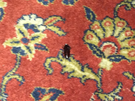 Novum Hotel Rieker Stuttgart Hauptbahnhof: Cockroach in ironing room (iPhone photo - he moved fast and I could not get close)