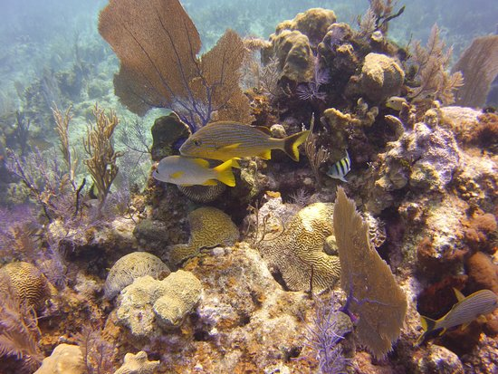 Southern Cross Club: Colorful reef and fish life