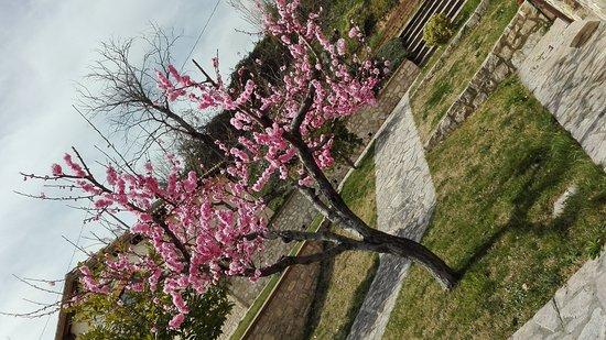 Marcellano, Italie : IMG_20170319_132346_large.jpg