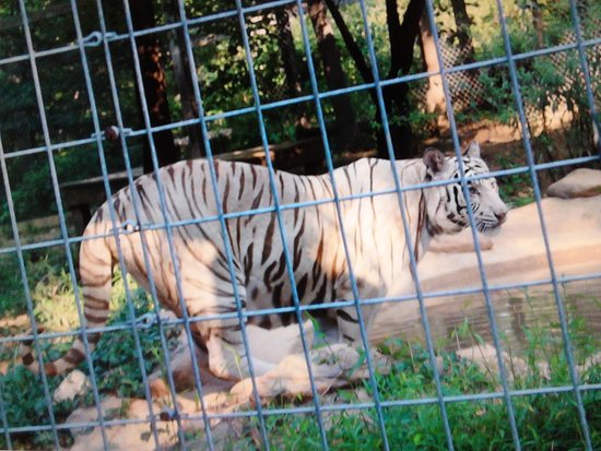 Catoctin Wildlife Preserve and Zoo: Absolutely captivating!