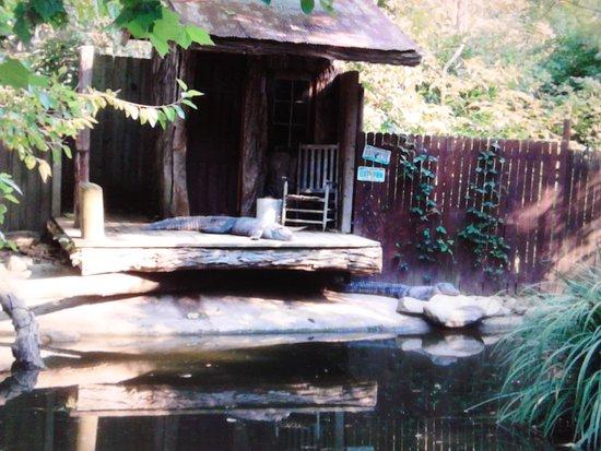 Thurmont, Μέριλαντ: Yup....gators too!