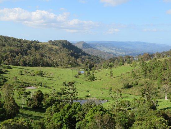 Canungra, Australia: Magnifique paysage