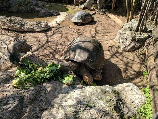 Hamilton, Islas Bermudas: Aquarium and zoo