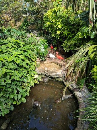 Hamilton, Bermudes : Aquarium and zoo