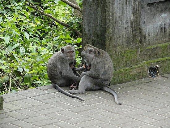 Lovina Beach, Indonezja: where Julia Roberts filmed eat pray love... Padang