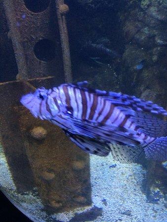 Bray, İrlanda: Lovely little aquarium