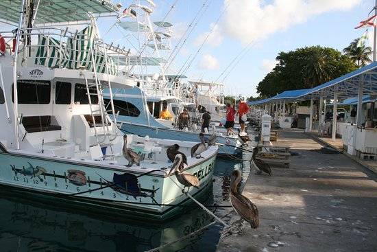 Haulover Boat Rentals and Tours