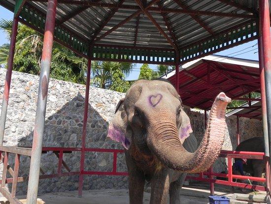Hutsadin Elephant Foundation: Rham Rhouy, the elder without teeth <3