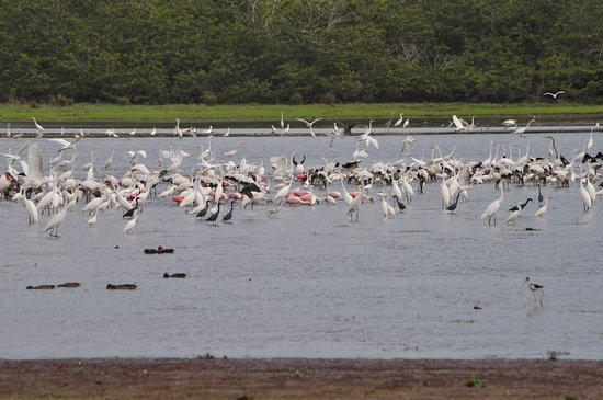 Cano Negro, Costa Rica: See mit vielen Wasservögeln