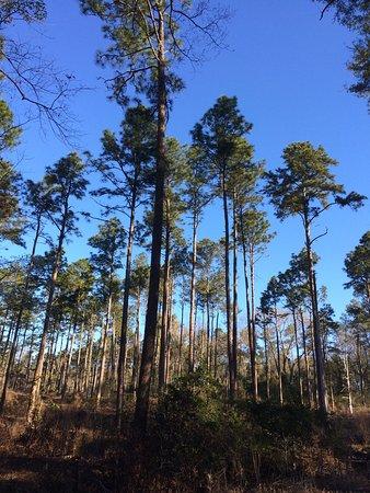 Aiken, SC: photo0.jpg