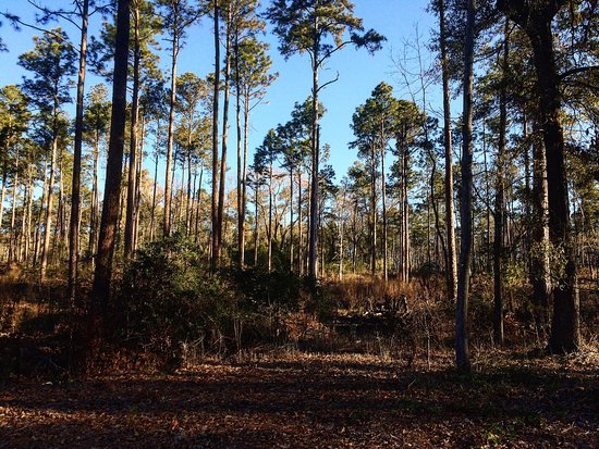 Hitchcock Woods: photo1.jpg
