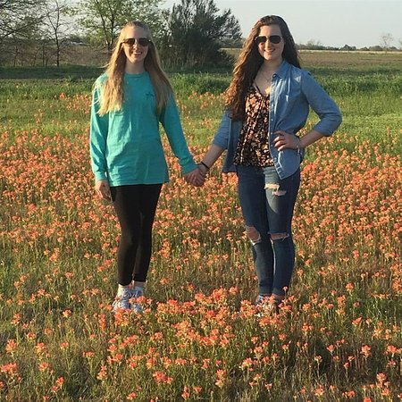 Ennis, TX: Rachel & Morgan in the Indian Paintbrushes at S I45 at exit 250 off service road, not off highwa