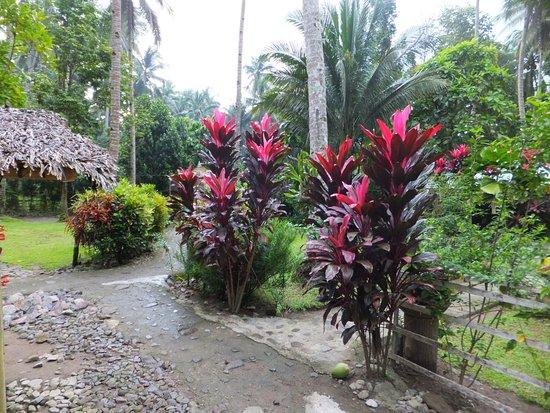 Abuyog, Filipinas: garden