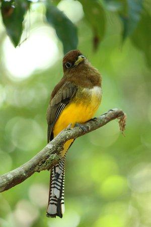 Puerto Jimenez, Costa Rica: sait plus