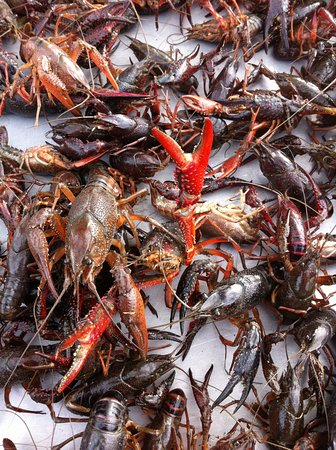 Vidalia, Λουιζιάνα: We also sell live crawfish