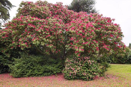 Par, UK: Flowers