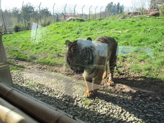 Hrabstwo Cork, Irlandia: Their enclosures are very big for the animals to roam around