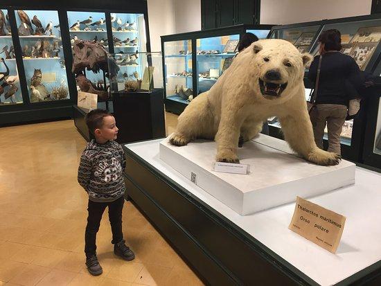 Museo Civico di Storia Naturale: photo2.jpg