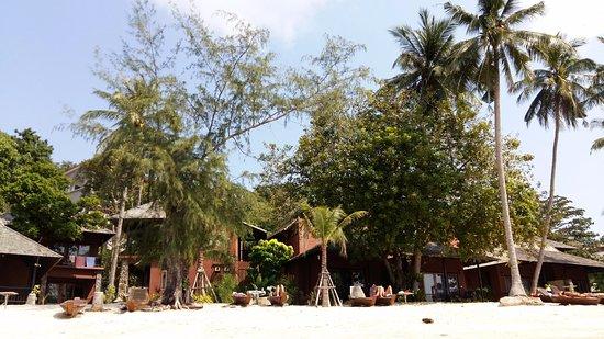Koh Tao Beach Club: Am Strand viele Schattenspendende Bäume