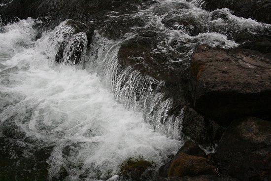 Lehardy's Rapids