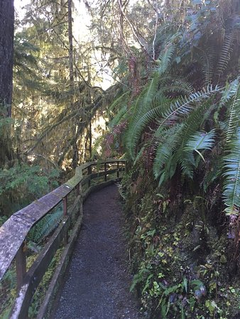 Quinault, WA: Rain Forest Nature Trail
