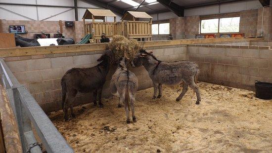 Blackpool Zoo Inside The Farm Barn