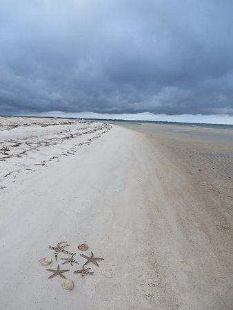 Saint George Island State Park Shells And Starfish St Fl