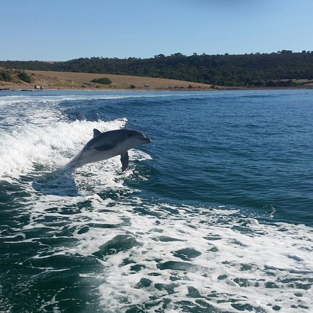 Kingscote, Australia: 20170319_165608-2_large.jpg