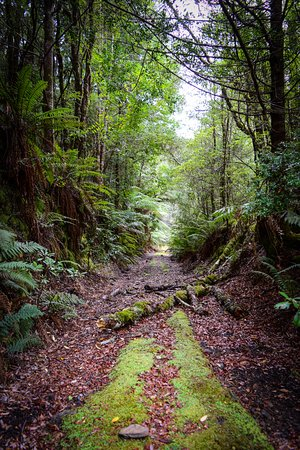 Waratah, Australia: The Old Magnet Rail Trail Through the Tarkine