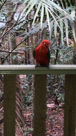 Narrows Escape Rainforest Retreat: Bird life was abundant around the cabin