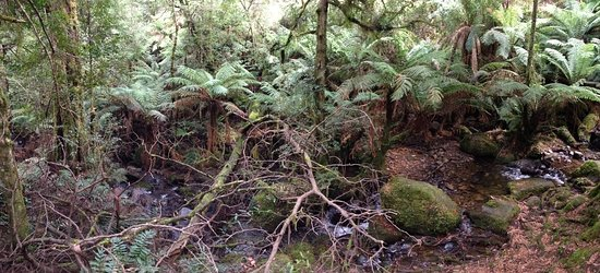 Warburton, أستراليا: Typical undisturbed view of a stream winding through the undergrowth, observed from the walkway