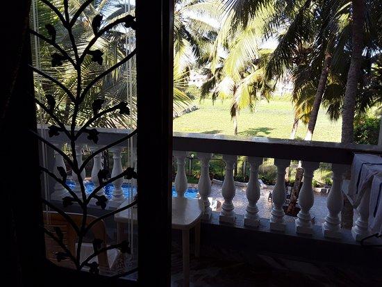 Palm Shades Spring