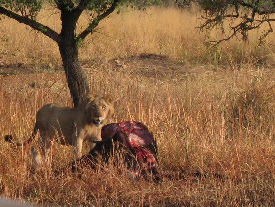 Murchison Falls National Park, Uganda: Honeymoon track at Sambiya's doorstep