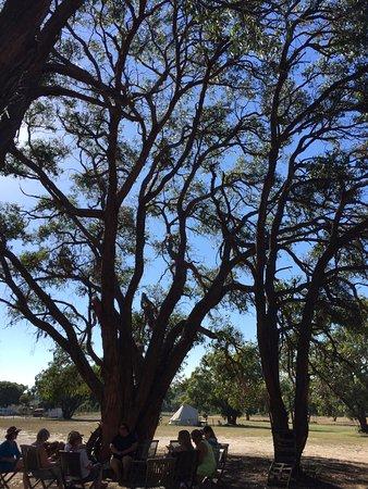 French Island, Australië: Main area - camp fire
