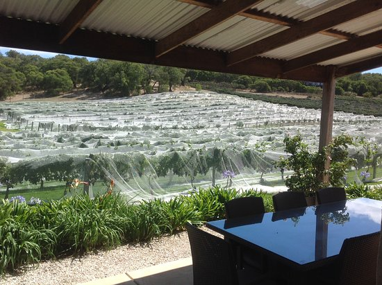 Bushtucker River & Wine Tours: Protecting those juicy fruits for our pleasure