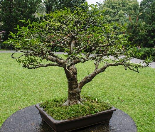 Botanic gardens photo de jardin botanique de singapour for Jardin botanique singapour