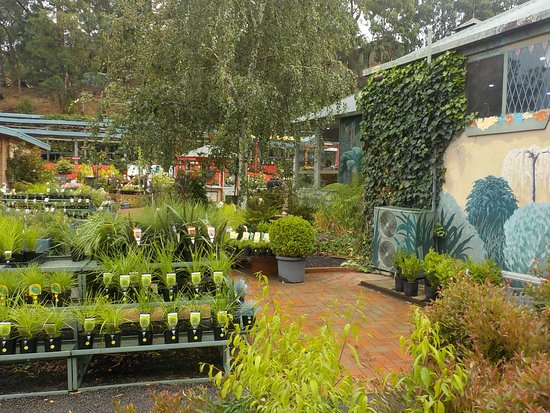Doncaster East, Australia: Side of tearooms