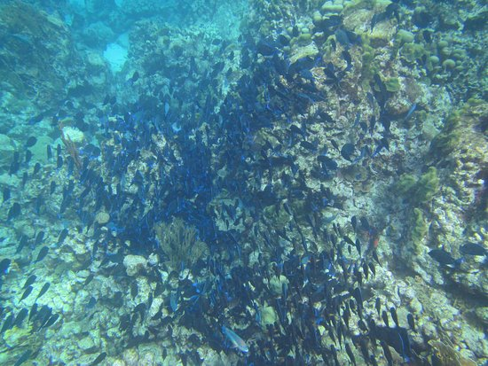 Morning Star: One of the large schools of fish we saw while snorkeling