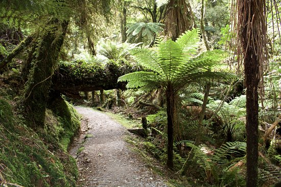 Wilderness Lodge Lake Moeraki: Rainforest walk