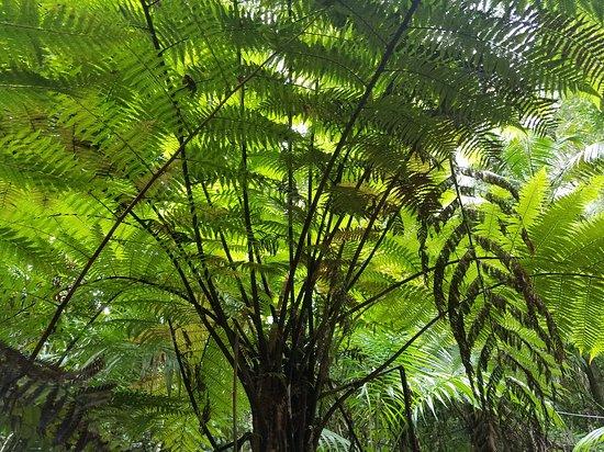 Korora, أستراليا: Ulidarra National Park
