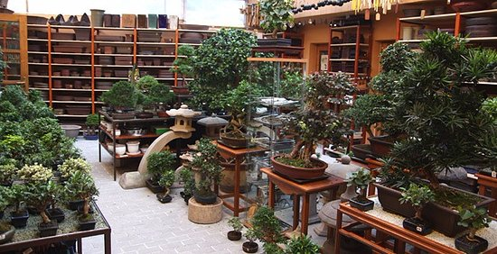 Bonsai Garden At The Tea House Picture Of Cajovna Dobrych Ludi Tea House Of Good People Nitra Tripadvisor