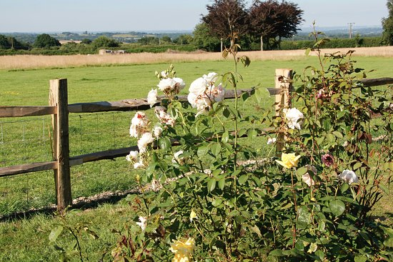 Wadhurst, UK: Garden and our paddock with views across Weald of Kent
