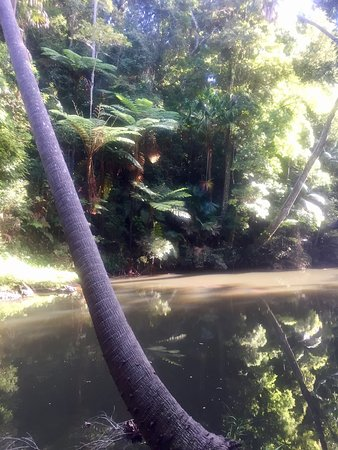 Eungella, Australia: photo1.jpg