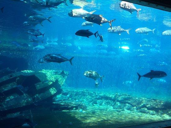 uShaka Sea World Aquarium: photo0.jpg