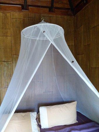 Monkey Island Resort: Chimpanzee bungalow cockroaches