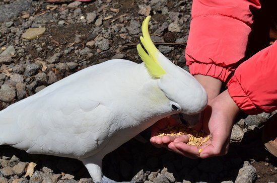 Kennet River: Watch out for the sharp beaks and claws of the cockatoos!
