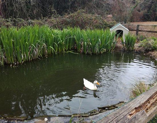 Stagno artificiale foto di la ghiandaia oasi wwf bosco for Stagno artificiale giardino